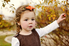 Sweet toddler in fall Stock Photos