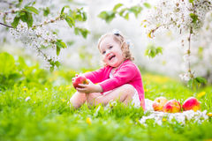 Sweet toddler girl eating apple in a blooming garden Stock Images