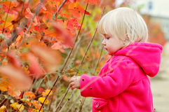 Sweet toddler girl Stock Photo