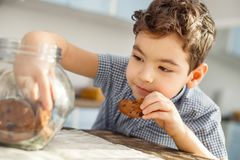 Smiling little boy eating some cookies. Sweet tooth. Handsome energetic little dark-haired boy sitting at the table and eating a cookie and taking some more stock images
