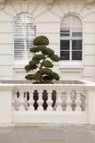 Sweet Topiary. Royalty Free Stock Photos