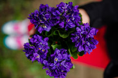 Sweet violets bouquet Royalty Free Stock Images
