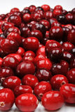 Sweet washed, fresh and organic cranberry Royalty Free Stock Photo