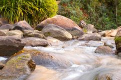 Sweet water stream runs around the rocks in the rain forest. Vegetation Royalty Free Stock Images