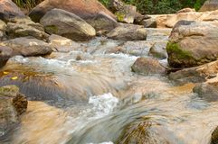 Sweet water stream runs around the rocks. In the rain forest Stock Photography