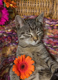 Sweet 12 weeks old kitten with a flower. Sweet 12 weeks old kitten is relaxing with sweet dreams and holding a orange blossom Royalty Free Stock Image