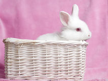 Sweet white baby rabbit Stock Photos