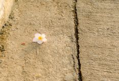 Sweet white Flowers on the ground Royalty Free Stock Photo