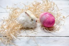 Sweet white fluffy bunny on hay and white wooden background next to pastel bright Easter eggs royalty free stock image