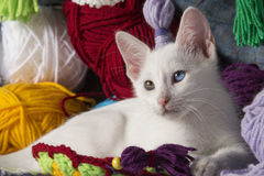 Sweet white kitten. White kitten with different colored eyes, between skeins of wool Royalty Free Stock Photos
