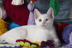 Sweet white kitten. White kitten with different colored eyes, between skeins of wool Stock Photos