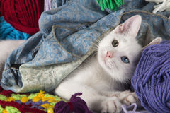 Sweet white kitten. White kitten with different colored eyes, between skeins of wool Royalty Free Stock Image
