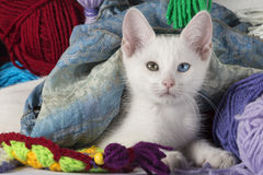 Sweet white kitten. White kitten with different colored eyes, between skeins of wool, looking at camera Royalty Free Stock Image