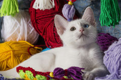 Sweet white kitten. White kitten with different colored eyes, between skeins of wool, looking up Royalty Free Stock Photos