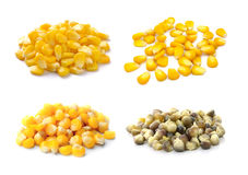 Sweet whole kernel corn on white background Stock Images