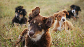 Sweet wild dogs. Four small puppies in the grass guarding an archeological park in Syracuse Royalty Free Stock Images