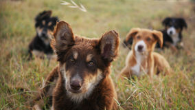 Sweet wild dogs. Four small puppies in the grass guarding an archeological park in Syracuse Stock Images