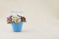 Sweet william flowers bouquet. In sky blue pot with get well soon card with copy space Royalty Free Stock Photo