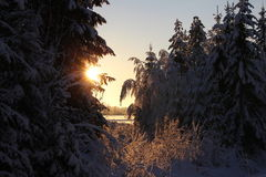Sweet winter day. Sunny winter day Stock Images