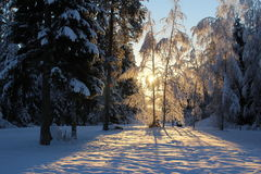 Sweet winter day. Sunny winter day Stock Image