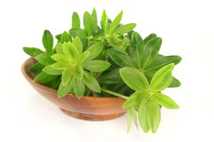 Sweet woodruff Royalty Free Stock Image