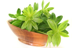 Sweet woodruff Royalty Free Stock Photo