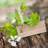 Sweet woodruff. On wooden ground Stock Photo