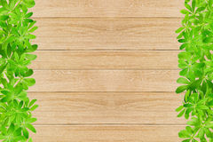 Sweet woodruff leaves as Frame Stock Photos