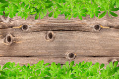 Sweet woodruff leaves as Frame on Wood Royalty Free Stock Photos