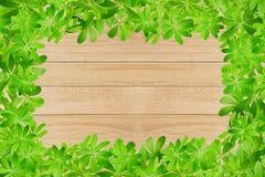 Sweet woodruff leaves as Frame Royalty Free Stock Image