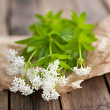 Sweet woodruff. On a slate Royalty Free Stock Images