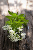 Sweet woodruff. On wooden ground Royalty Free Stock Photography