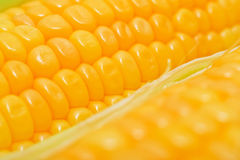 Sweet yellow corn cobs macro Royalty Free Stock Photography