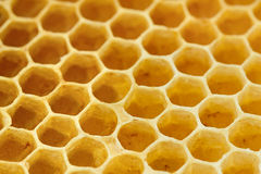 Sweet yellow honeycomb Royalty Free Stock Image