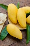 Sweet yellow mango fruit on summer on wood table.  Royalty Free Stock Image