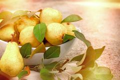 Sweet yellow pears in white bowl. Delicious and healthy pear in diet Stock Photography