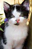 Sweet Young Cat. In the Garden Stock Photography