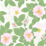 Sweetbriar pattern Stock Images
