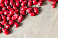 Sweetbrier berries red background Royalty Free Stock Photos