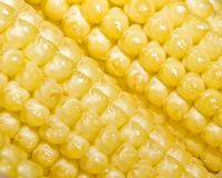 sweetcorn Royaltyfria Foton
