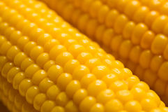 Sweetcorn Stock Photography
