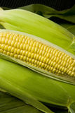 Sweetcorn. Cob, with sealed cobs and corn leaf background Royalty Free Stock Photos