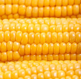 Sweetcorn background Royalty Free Stock Images