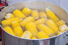 Sweetcorn boiling Royalty Free Stock Image