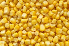 Sweetcorn closeup background Stock Photos