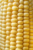 Sweetcorn Cob Close Up Stock Images