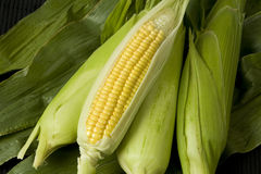 Sweetcorn cobs. With sealed cobs and corn leaf background Royalty Free Stock Photography
