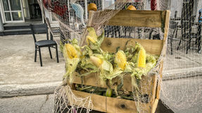 Sweetcorn cobs in a wood box Stock Images