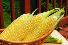 Sweetcorn on deck Stock Images