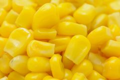 Sweetcorn kernels Stock Images